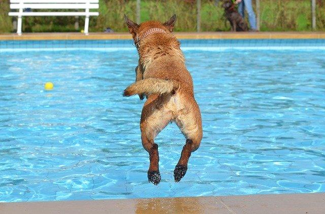 Pes skákající do bazénu.jpg